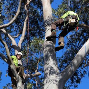 Tree Fellers Pretoria North East
