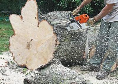 stump removal services Pretoria