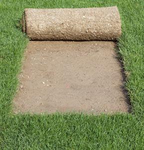 Instant lawn supplies Pretoria