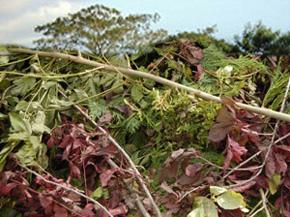 garden refuse removal services Pretoria